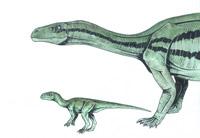 """Mussaurus patagonicus """"vegrandis"""" (*) (C/N)"""