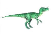 Ornitholestes hermanni (?) (C/N)