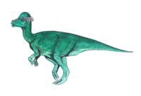 Pachycephalosaurus wyomingensis (C/N)