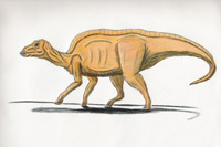Maiasaura peeblesorum (C/N)