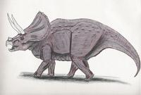 Triceratops serratus (*) (C/N)