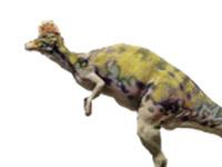 Corythosaurus casuarius (JN)