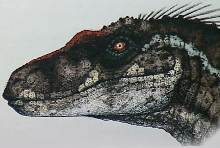 "Velociraptor ""antirrhopus"" (*) (S/F)   Jurassic-Pedia"