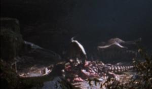 EdmontoSkull