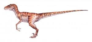 Raptor_male