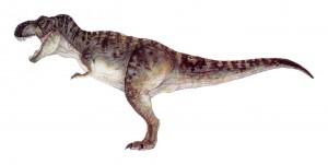 T-rex_male