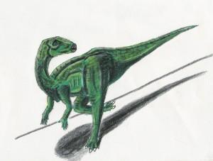 Hypsilophodon foxii (C/N)
