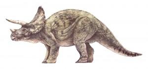Triceratops horridus (JN)