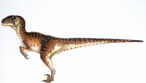 velociraptor small