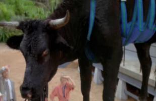 Image result for jurassic park cow