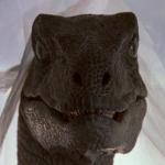 Raptortarp