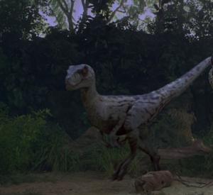 Velociraptor antirhopus sornaensis Alpha Female (S/F)