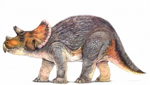 baby triceratops small
