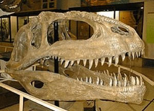 Giganotosaurus carolinii (S/F)
